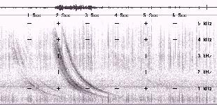 sound graph of VLF whistler